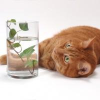 疑問解決!ウォーターサーバーの水をネコが飲んでも大丈夫?